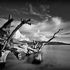 A Log's Life by Richard Barry