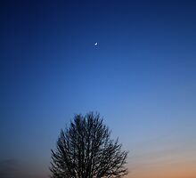 Sickle Moon in an Empty Sky by Martin McKiernan