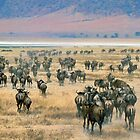 Ngorongoro Wildebeest by Michael Stiso