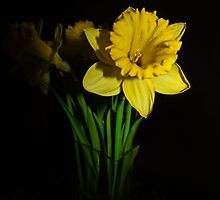 Jonquils by TickerGirl