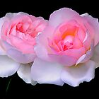 Two Pink Roses by joAnn lense