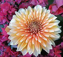 Lotus Flower by Matt Eagles