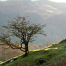 Towards Loughrigg by mikebov