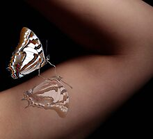 Madam Butterfly by JulieM