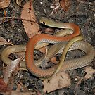 Whip Snake by NickBlake