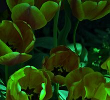 Under Water Tulips by scenebyawoman