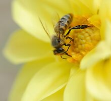 Bee by igorsin