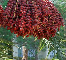Date palm by igorsin