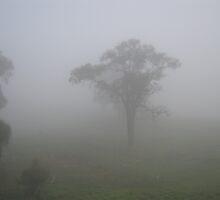 Foggy Morning by Bettysplace