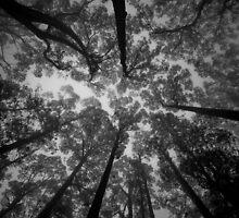 Shades of Grey by Ryan O'Donoghue