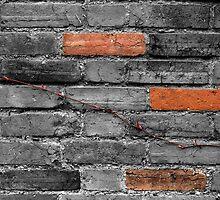 Colour bricks with plant by Tom Palmer