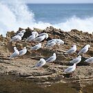 """""""Heads Down Everyone, wave approaching"""" by Karina  Cooper"""
