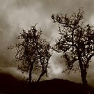 Gnarled and stormy by Jenny Wood