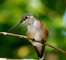 Eye to Eye with a Hummingbird by patti4glory