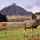 Oh Deer, it&#x27;s Buachaille Etive Mr! by Andrew Ness - www.nessphotography.com