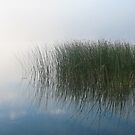 Reeds on a Foggy Morning. by Christopher Clark