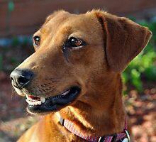 Penny Portrait by SamTheCowdog