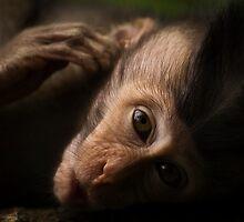 Macaca Fascicularis by Franky Lie
