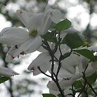 White Flowers  by KatMarieArt