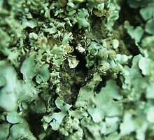 Green Lichen Abstract by Sandra Cockayne