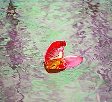 Floating Lily Pad by vigor