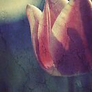 Tulip  by Tamara Brandy
