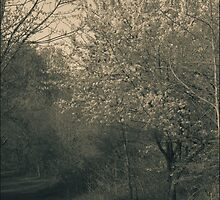 The Delicacy Of Spring Secor Metro Park A Split Toned Photograph by Mitch Labuda