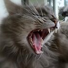 Big Yawn for a Little Girl by Chris Kiely