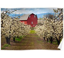 Red Barn Spring Poster