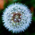 Ethereal Dandelion by startori