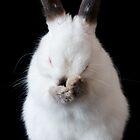 Clean Bunny by Karem Nunez