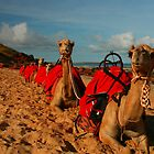 The Camels of Cable Beach. by wayne51