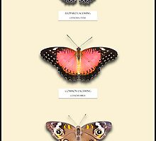 Butterfly Vertical Collection 6 - Specimen style print by Mark Podger