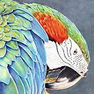 Parrot by Valentina Gatewood