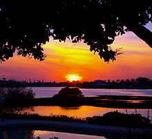 Sunset under two canopies by ♥⊱ B. Randi Bailey
