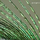 Peacock feather v1 by Patrick Lemmens