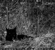 Black jaguar by AleFletcher