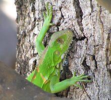 Iguana in the Pantanal by Nupur Nag