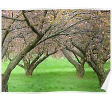 The Old Apple Orchard Poster