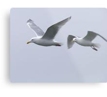 Gulls in a Storm (5) Metal Print