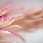 Magnolia Macro by Annie Lemay  Photography