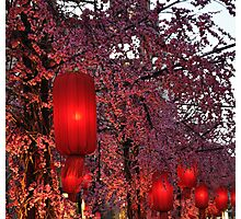 Pink Cherry Blossom Red Lanterns Photographic Print