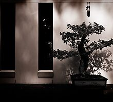 Zen by Trish O'Brien