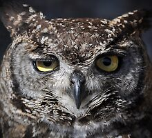 Winking Owl by swhite99