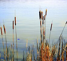 Cattails By The Lake by debbiedoda