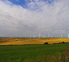Wind Farm by ColinBoylett