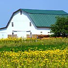 Barn amid the Mustard weed... by Ruth Lambert