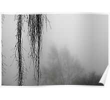 Hanging Branches In The Fog Poster