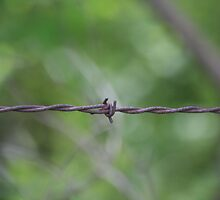 Barbed Wire by Dave & Trena Puckett