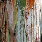Eucalypt Art by Harry Oldmeadow
